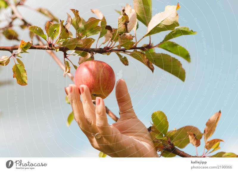 Woman Human being Nature Plant Tree Hand Animal Adults Eating Environment Feminine Sports Garden Food Fruit Weather