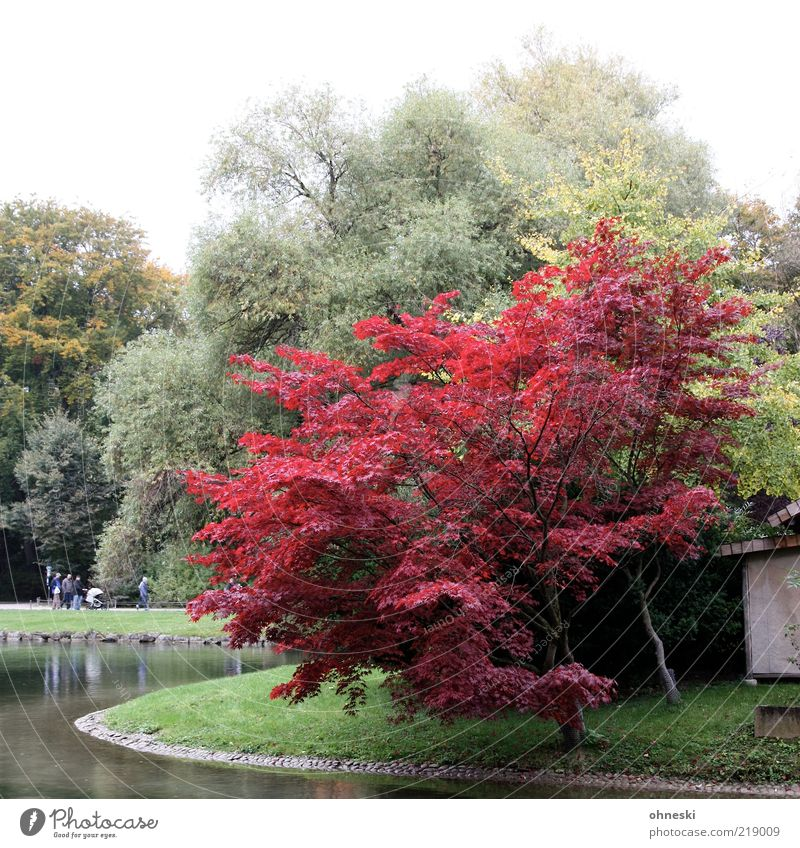 Nature Tree Red Relaxation Autumn Group Park Environment To go for a walk Lakeside Pond Lake