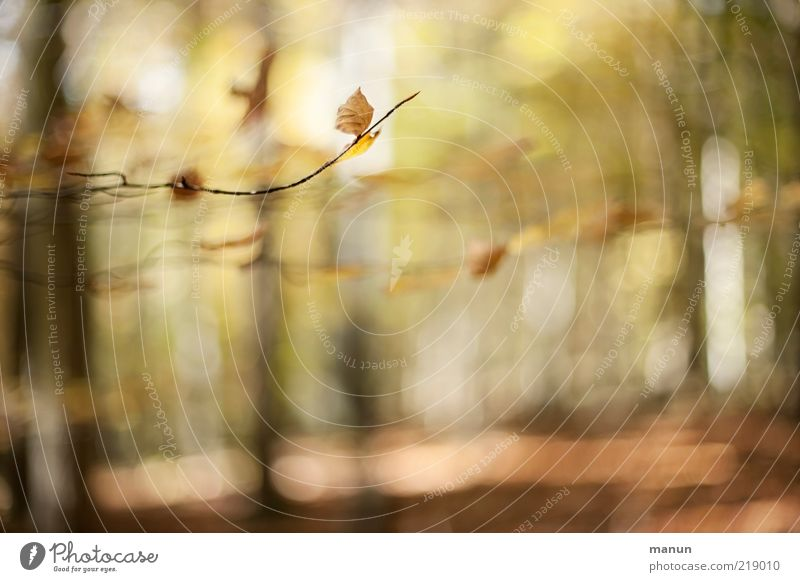 Nature Beautiful Tree Leaf Forest Autumn Landscape Exceptional Beautiful weather Original Autumn leaves Twigs and branches Autumnal Autumnal colours