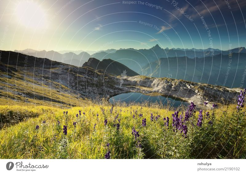 wildflowers on hill by alpine lake at sunrise, Germany Sky Nature Vacation & Travel Plant Blue Summer Sun Landscape Flower Mountain Meadow Garden Lake Rock Wild