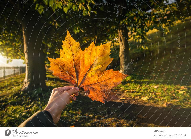 Human being Nature Plant Sun Tree Hand Leaf Forest Yellow Autumn Orange Park Gold Beautiful weather Stop Autumnal