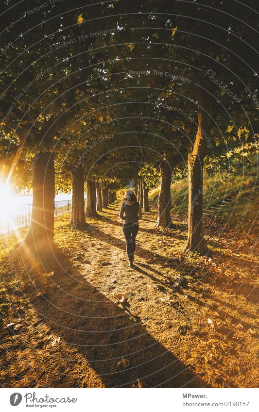 Human being Youth (Young adults) Young woman Tree Landscape Loneliness Leaf Forest Autumn Feminine Movement Hiking Park Walking Beautiful weather