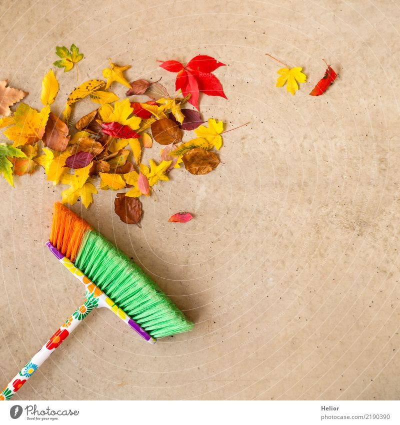 Autumnal cleaning action with dry, coloured leaves Garden Nature Tree Park Concrete Cleaning Yellow Gray Green Red Orderliness Cleanliness Arrangement
