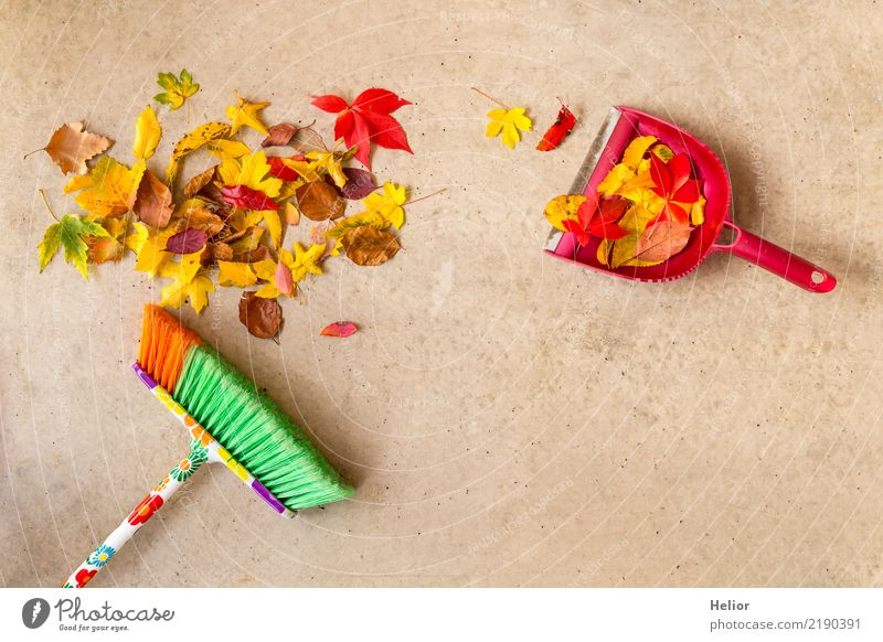 Autumnal cleaning action with dry, coloured leaves Garden Nature Plant Park Concrete Cleaning Yellow Gray Green Red Orderliness Cleanliness Pure