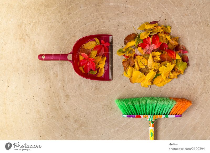 Autumnal cleaning action with dry, coloured leaves Nature Plant Tree Garden Park Concrete Cleaning Yellow Gray Green Red Orderliness Cleanliness Pure