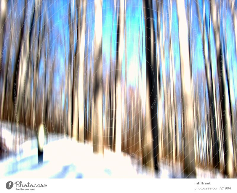distorted forest Forest Tree Tree trunk Blur Distorted Winter Cold Snow