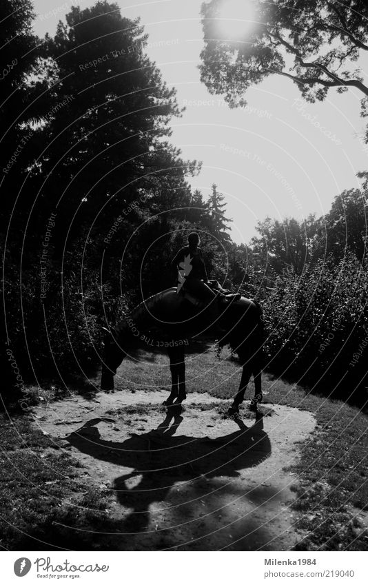 lonesome rider Ride Equestrian sports Human being 1 Landscape Tree Animal Horse Adventure Contact Joy Attachment Rider Figure Black & white photo Exterior shot