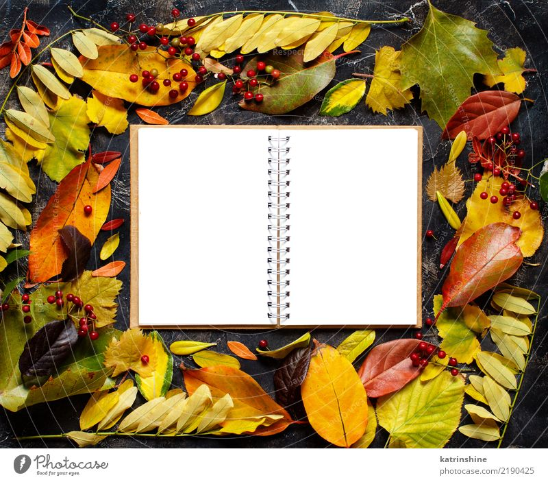 Autumn leaves and notebook on a dark background Craft (trade) Leaf Forest Paper Dark Bright Brown Yellow Green Red Colour border Botany branch colorful