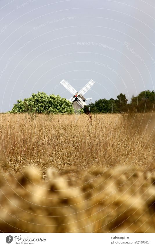 Wheat - Mill Summer Landscape Air Sky Cloudless sky Field Aerø Manmade structures Building Windmill Windmill vane Blue Yellow Gold Gray Green White Movement