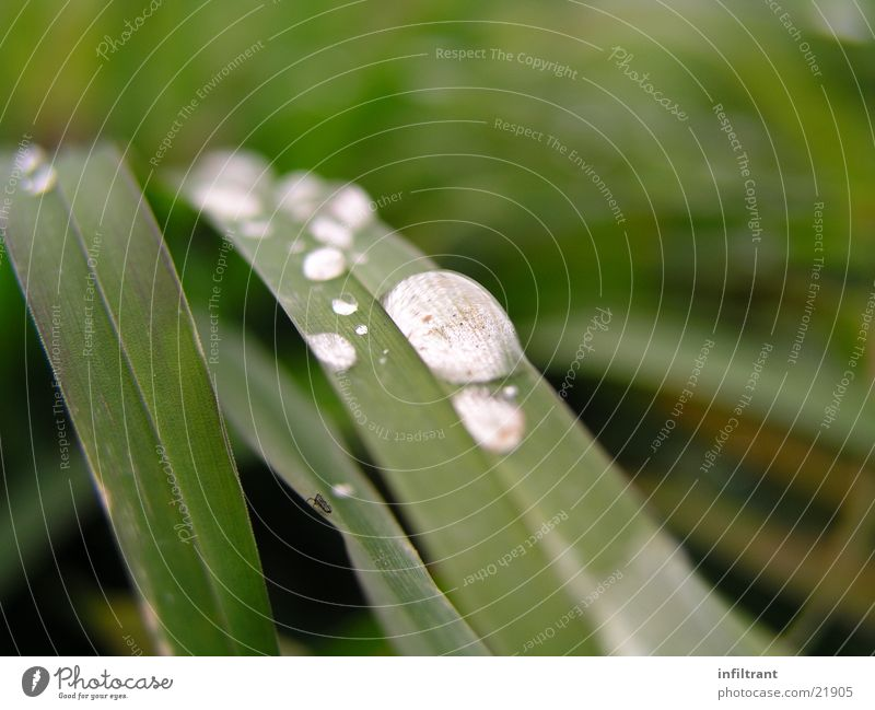 Water Green Leaf Meadow Grass Rain Drops of water Lawn Dew Blade of grass