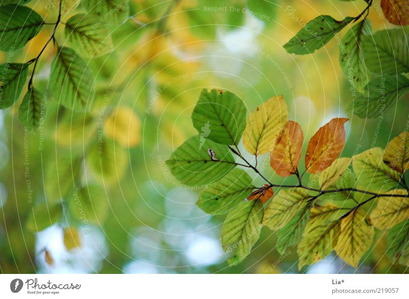 autumnal love Nature Autumn Multicoloured Green Leaf Leaf canopy Autumn leaves Autumnal Early fall Autumnal colours Colour photo Exterior shot Deserted