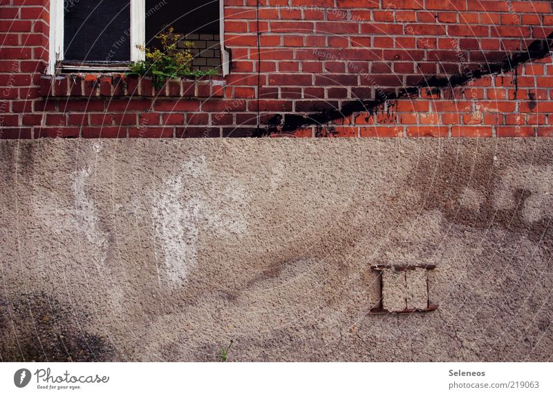 window seat Plant Flower Foliage plant House (Residential Structure) Ruin Building Wall (barrier) Wall (building) Brick Old Dirty Dark Broken Gloomy Stagnating
