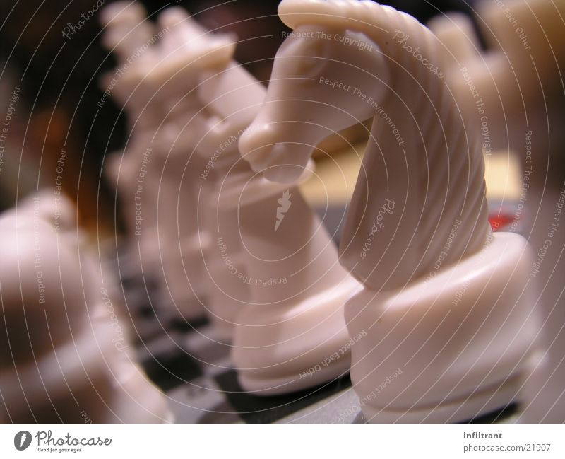 chess Board game Horse Chess piece White Playing Leisure and hobbies Macro (Extreme close-up) Close-up Dull