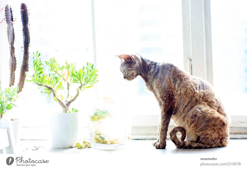 Beautiful White Green Summer Animal Cold Relaxation Style Window Spring Happy Cat Contentment Brown Flat (apartment) Glass