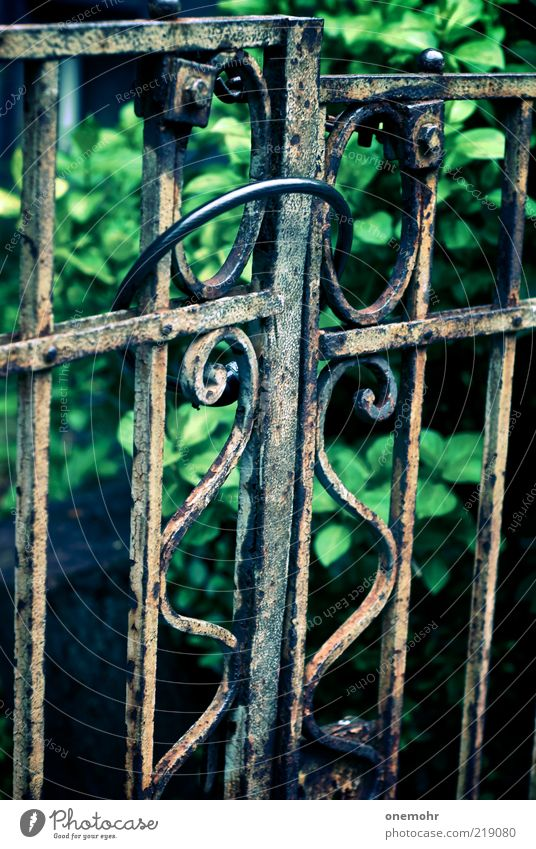Old Green Summer Calm Dark Garden Metal Park Time Brown Closed Living or residing Change Transience Historic Gate