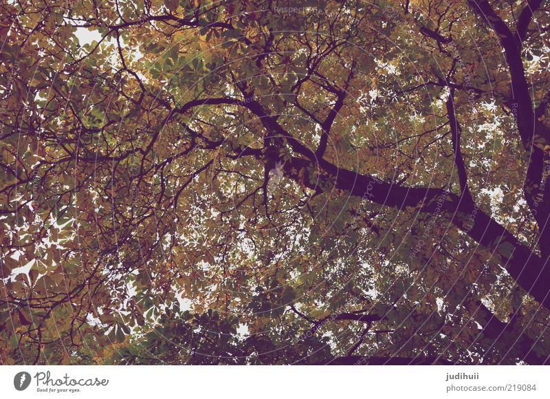 beautiful views Environment Nature Landscape Plant Tree Leaf Leaf canopy Treetop Tall Brown Gold Green Transience Tree trunk Height Autumn Autumnal