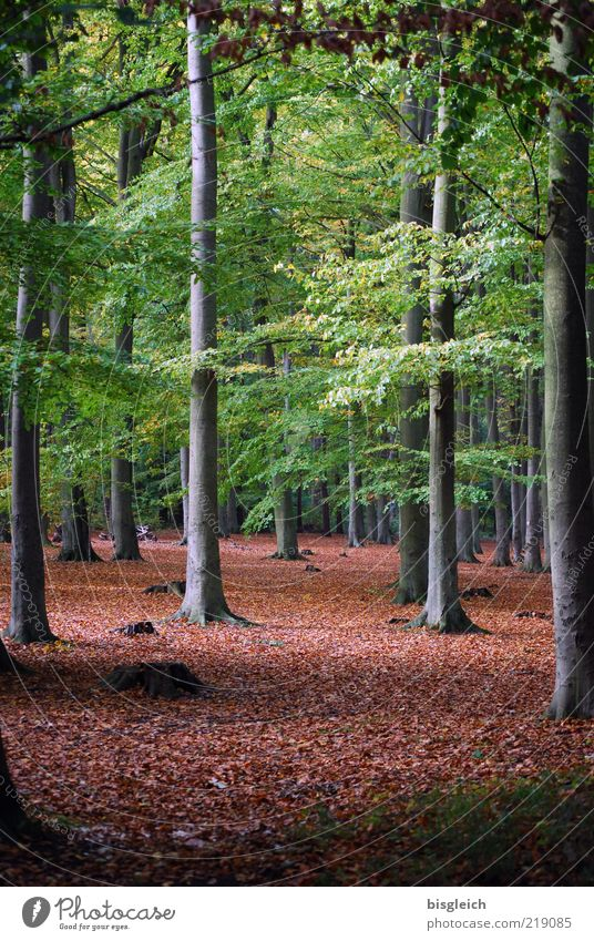 Nature Tree Green Plant Calm Leaf Forest Dark Autumn Wood Brown Environment Tall Transience Tree trunk Lose