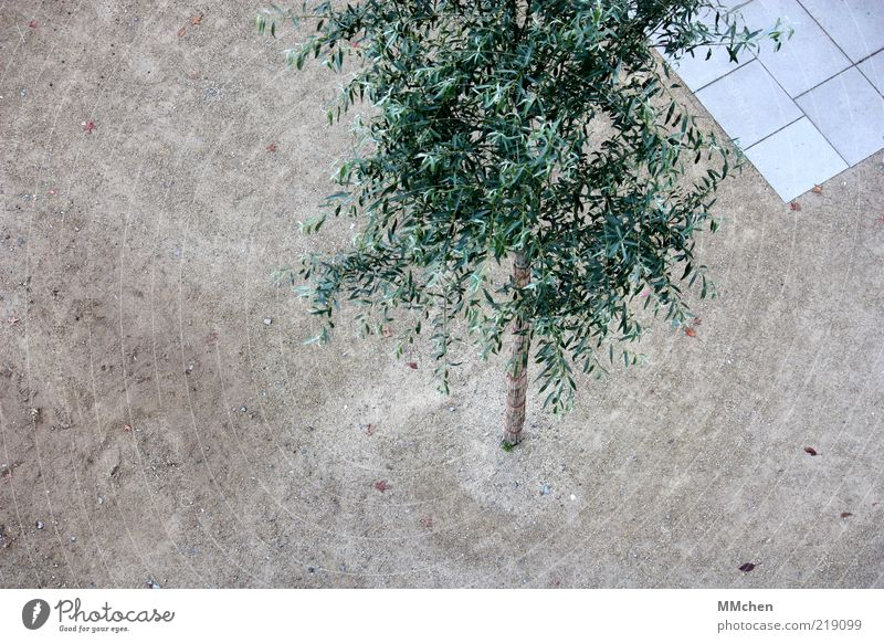 Tree Green Calm Gray Sand Time Places Growth Corner Simple Clean Treetop Bird's-eye view Sharp-edged Paving tiles