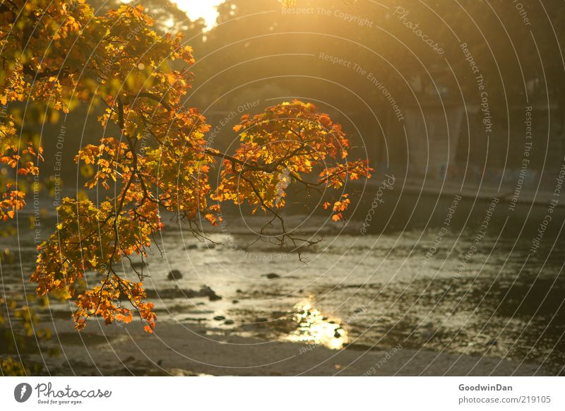Nature Beautiful Calm Autumn Moody Environment Gold Free River Branch Illuminate River bank Autumnal Autumnal colours