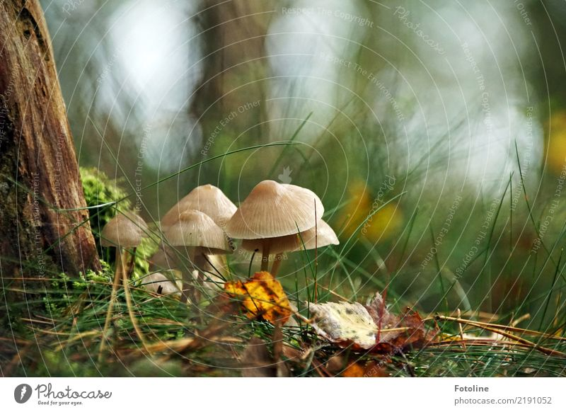 meeting Environment Nature Landscape Plant Autumn Tree Grass Wild plant Forest Bright Near Natural Brown Green Mushroom Mushroom cap Fir needle Tree bark