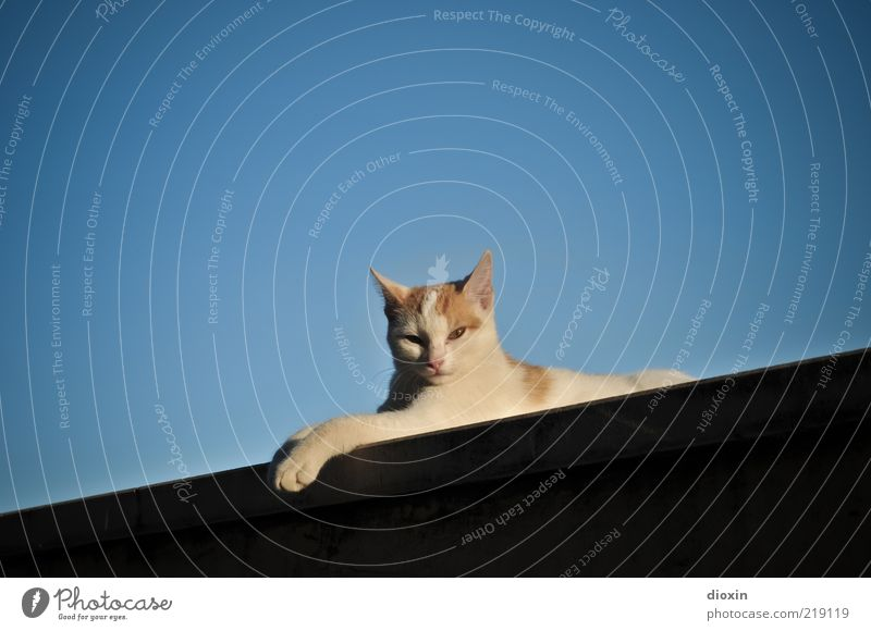 Calm Animal Relaxation Wall (building) Wall (barrier) Cat Lie Serene To enjoy Pet Cuddly Cloudless sky Cat's paw
