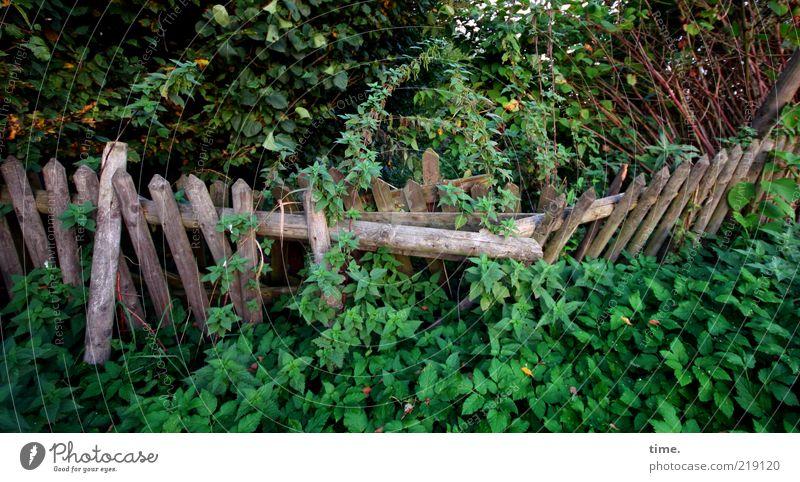 Nature Old Green Plant Garden Wood Environment Bushes Broken Wild Border Fence Chaos Foliage plant