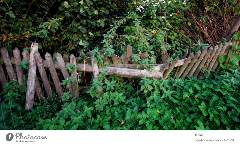 reconquest Nature Garden Garden fence Deserted Plant Landscape format Topple over Decompose depressed Green Wood Fence Wild Environment Bushes Chaos Creeper