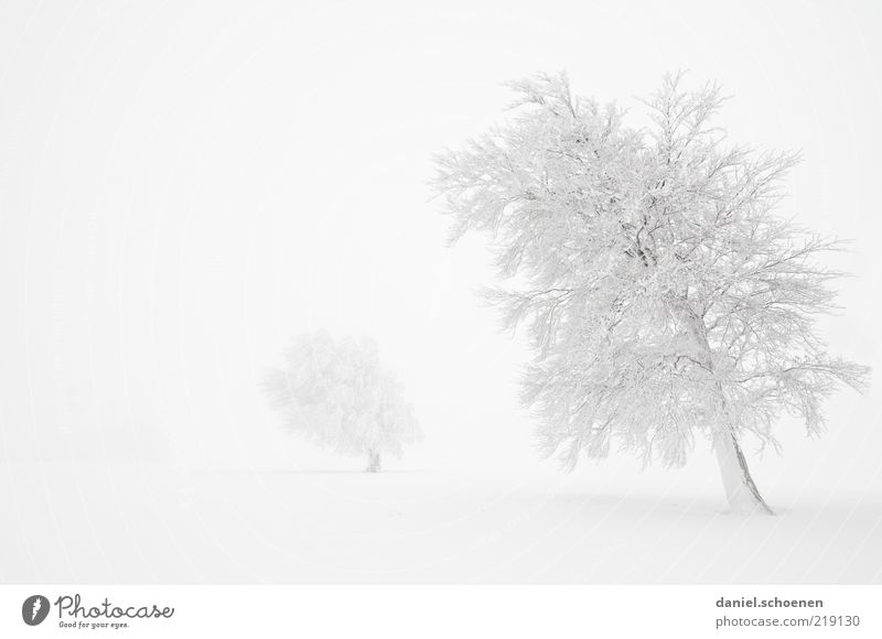 quite a bit white Climate Wind Fog Ice Frost Snow Tree Bright White Monochrome Black Forest Black & white photo Subdued colour Copy Space left Deserted Gorgeous