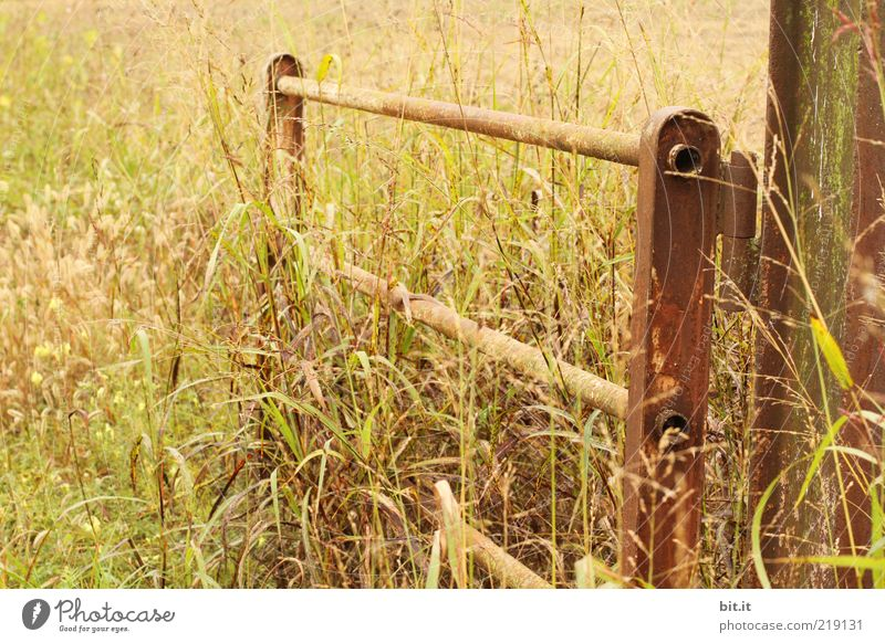 bonanza Nature Landscape Plant Summer Autumn Warmth Grass Meadow Field Romance Agriculture Fold Goal door Entrance Fence Fence post Grain Grain field Cornfield