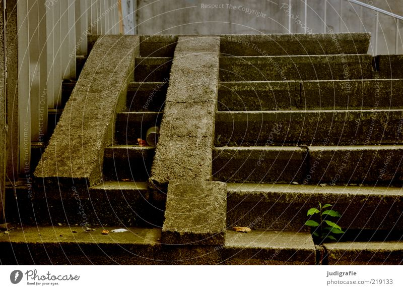 crackers Plant Manmade structures Building Architecture Stairs Concrete Dark Sharp-edged Trashy Crazy Stagnating Decline Past Transience Destruction Handrail
