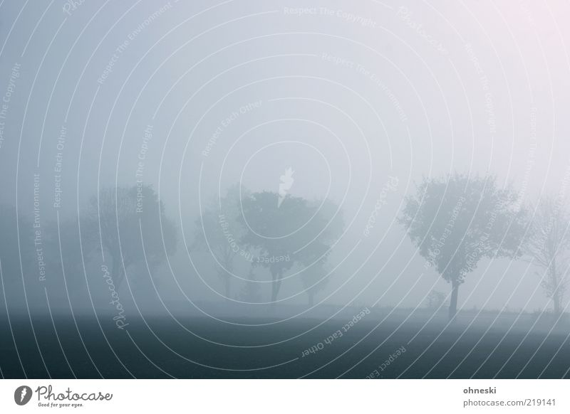 Poor visibility Nature Autumn Weather Fog Tree Street Avenue Dream Dark Gray Sadness Grief Longing Loneliness Subdued colour Copy Space top Dawn Bad weather