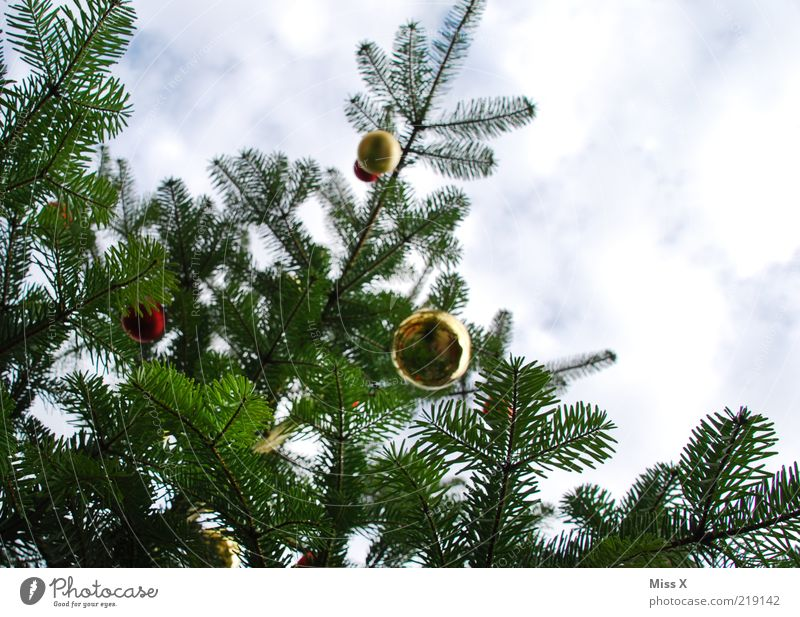Christmas & Advent Sky Clouds Glittering Tall Christmas tree Decoration Sphere Glitter Ball Hang Christmas decoration Twigs and branches Fir branch