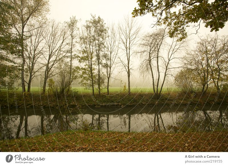 waiting without expectation Environment Nature Plant Autumn Bad weather Fog Tree Grass River bank Bad Kissingen district Bavaria To dry up Infinity Creepy