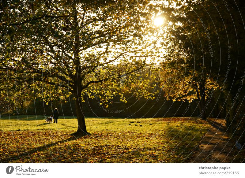 Human being Dog Tree Plant Sun Flower Leaf Animal Loneliness Relaxation Meadow Autumn Life Movement Park Together