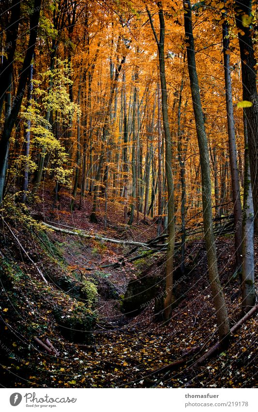 Red Riding Hood Forest Landscape Earth Autumn Beautiful weather Tree Bushes Leaf Wild plant Hill Dark Multicoloured Leisure and hobbies Change Colour photo