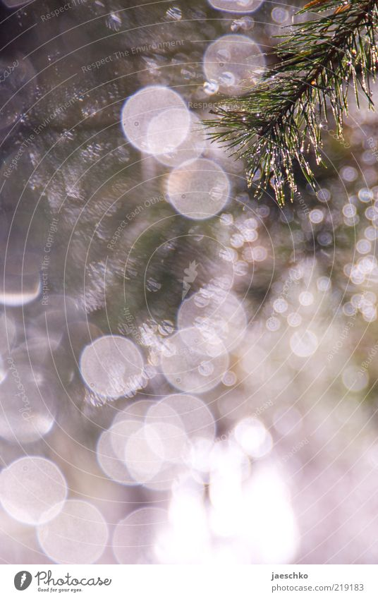 Nature Winter Snow Snowfall Ice Glittering Illuminate Frost Fantastic Twig Card Dew Foliage plant Point of light Gorgeous Fir needle