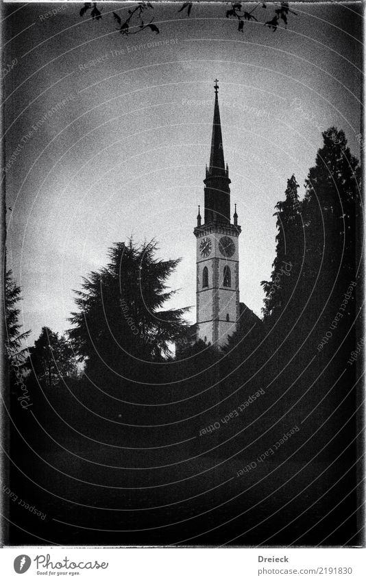 steeple Tree Leaf Park cham Switzerland Small Town Church Tower Black White Film 35mm Ilford FP4+ Black & white photo Exterior shot Day Light Shadow Contrast