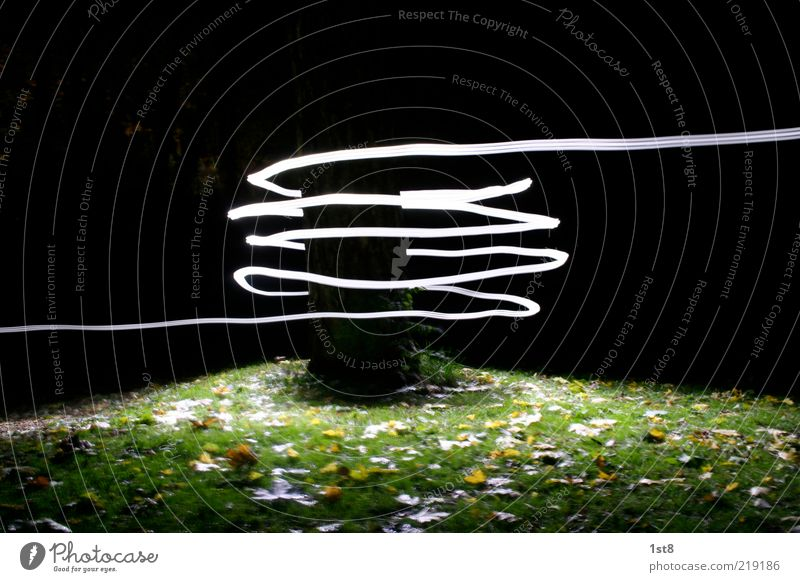 Tree Plant Leaf Dark Grass Bright Environment Energy industry Cool (slang) Metal coil Tension Long exposure Spiral Low-key Autumn leaves Whorl