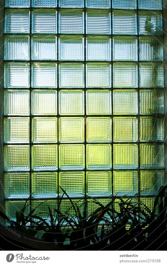 windows House (Residential Structure) Dream house Building Wall (barrier) Wall (building) Window Looking Bright Glass Glass block Pattern Plant Houseplant
