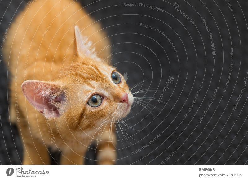 Cat Beautiful Animal Black Baby animal Yellow Eyes Orange Sit Cute Observe Curiosity Hope Pet Caution Interest
