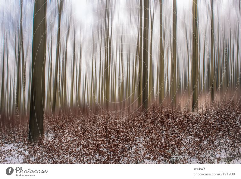 Nature Winter Forest Cold Autumn Movement Snow Brown Tall Change Dry Deciduous forest Beech wood