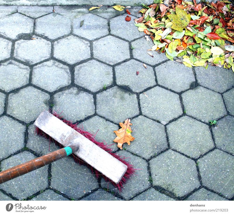 Fight back! Gardening Broom Autumn Leaf Terrace Sidewalk Utilize Cleaning Many Gray Green Red Effort Accuracy Nature Arrangement Paving stone Cobbled pathway