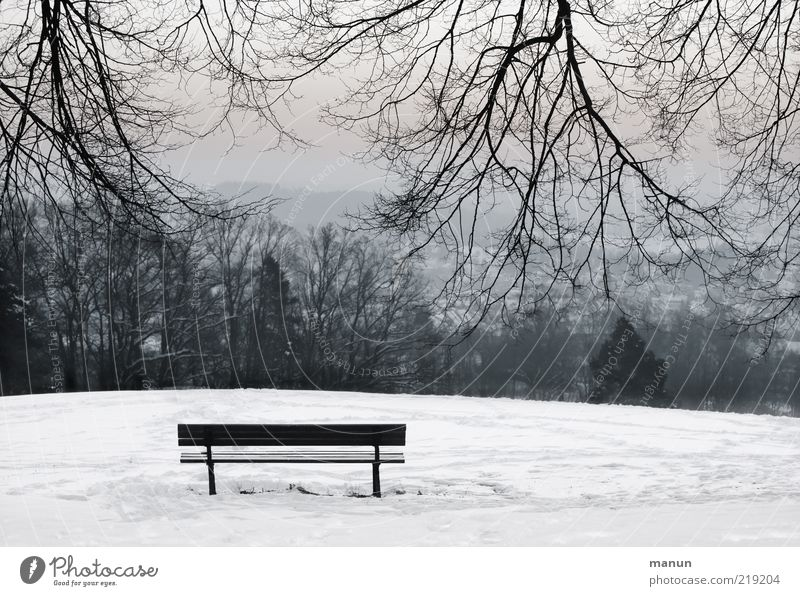 resting point Winter Snow Nature Landscape Ice Frost Tree Branch Park Hill Bench Cold Emotions Calm Loneliness Uniqueness Peace Stagnating Contentment