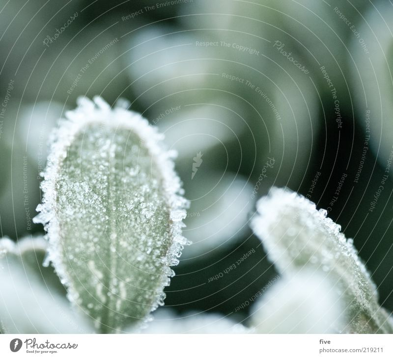 Nature Green Plant Leaf Cold Autumn Ice Fresh Frost Frozen Dew Ice sheet