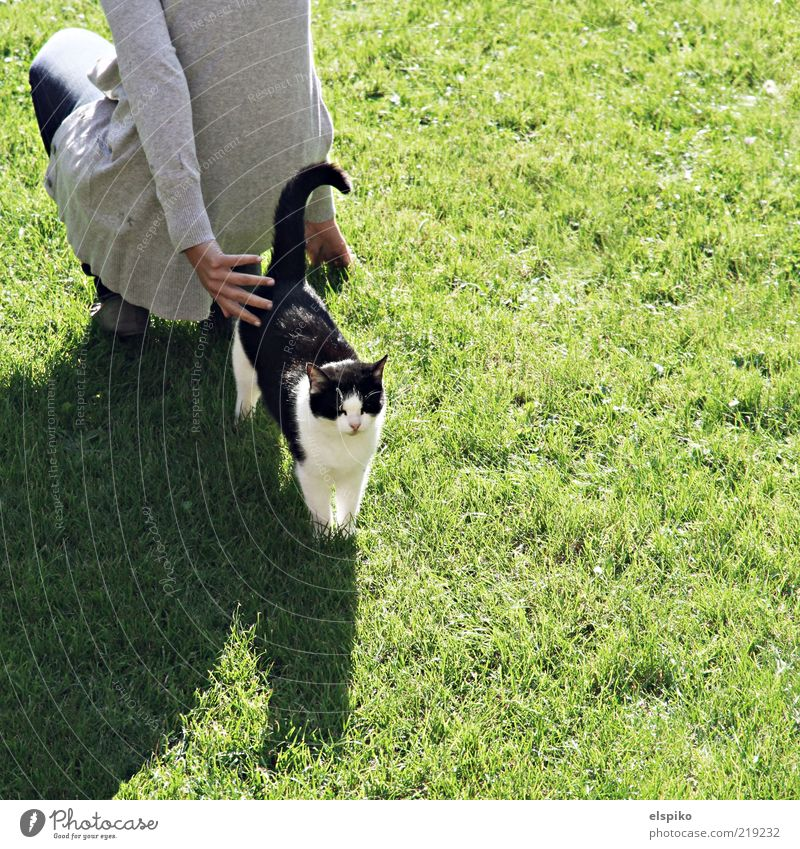back to back Human being Feminine Woman Adults 1 Animal Pet Cat Crouch Kneel Stand Wait Lawn Green Pelt Colour photo Exterior shot Copy Space right Light Shadow
