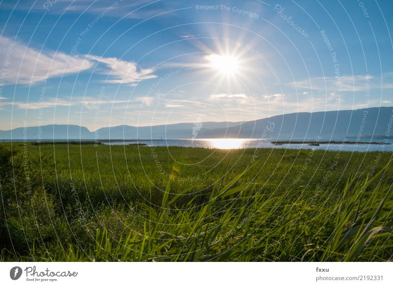 Nature Summer Water Landscape Meadow Lake Field Switzerland Environmental protection Pond Blue sky Marsh Nature reserve Body of water Bog