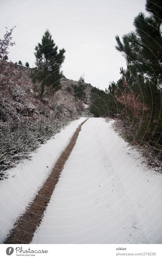 snow Green White Tree Winter Forest Street Snow Mountain Brown Ice Ground Flag Transience Village Story Tire
