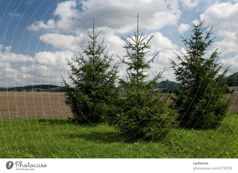 All good things come in threes. Environment Nature Sky Tree Meadow Field Esthetic Sustainability Calm 3 Fir tree Colour photo Exterior shot Deserted Day Light