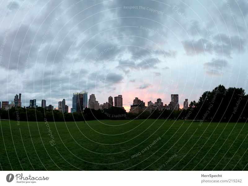 Tree City Green Calm Meadow Gray Park High-rise Empty Skyline Dusk New York City Building Peaceful Clouds in the sky Cloud formation