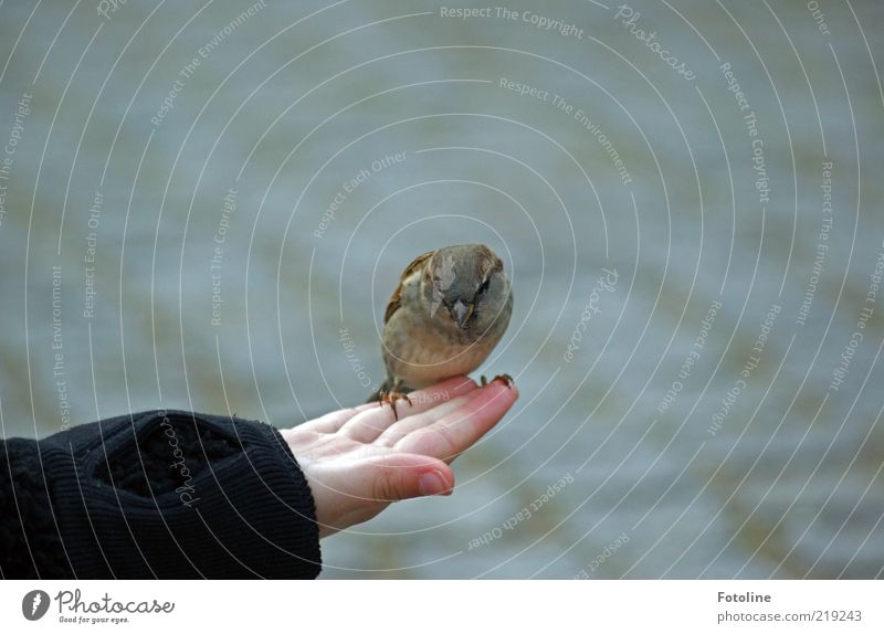 Hey Little one Human being Child Skin Hand Fingers Animal Wild animal Bird Small Astute Natural Sparrow Brash Colour photo Subdued colour Exterior shot